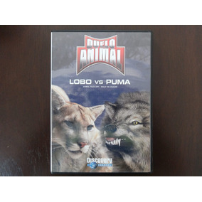 Dvd Duelo Animal Lobo Vs Puma Envío Gratis