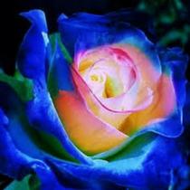 10 Sementes Rosa Dragão Azul Exótica Rara Enfeite Jardim