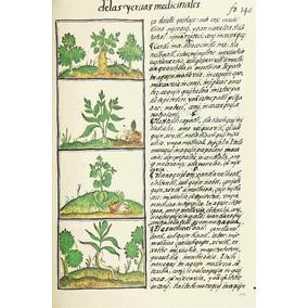 Lienzo Tela Códice Florentino Plantas Medicinales Azteca