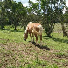 Egua Gipshorse Sem Registro