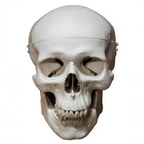 Modelo Anatomico Del Craneo
