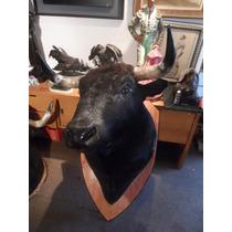 Cabeza De Toro Disecada Lidiado Por Jose Maria Manzanarez