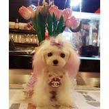 Bellos Poodle Micro Toy Las Condes