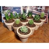 Cactus En Maceta De Barro Tipo Vintage