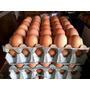 Huevos De Campo 6 Maples.organicos.envio Gratis!