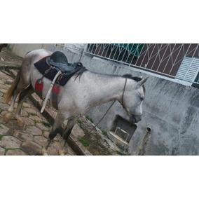 Vendo Cavalo Manga Larga Mineiro 4 Anos