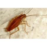Cucarachas Veneno Y Asesoramiento En Su Casa Va Fumigador