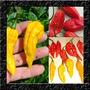 Kit Sementes Da Pimenta Bhut Jolokia Yellow + Red + Brinde!