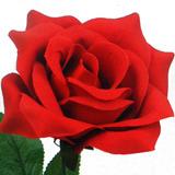 50 Rosas Artificiais Bizz - Atacado Flores Artificial Botão