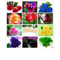 90 Sementes De Lindas Rosas Exóticas 9 Tipos E Cores