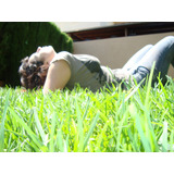 Raigras Anual - Cesped Ingles - Rye Grass - Resiembra X 25kg