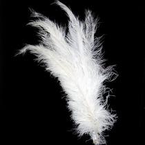 Pluma De Avestruz Espigão (10 Unidades) - Plumas E Penas