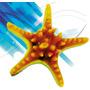 Estrella De Mar De Resina - 12x12 Simil Reales- Excelentes!