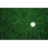 Rye Grass Perenne Turf Type - Raigras Semillas X 25kg