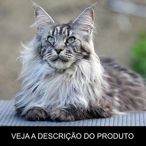 Gato Maine Coon - Tudo Sobre A Raça (frete Grátis) Promoção!