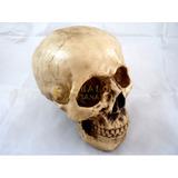 Cranio Caveira Tamanho Grande Em Resina Ideal Para Halloween