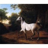 Cavalo Árabe Garanhão Campo Pintor Agasse Repro Na Tela