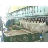 Maquinas Para Abatedouro De Frangos, Depenadeira,caldeiras