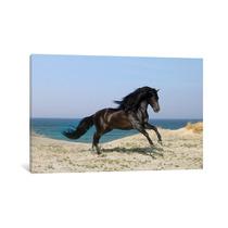 Pintura Arte Black Horse On The Beach By Bob Langrish, 40x2