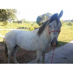 Cavalo Inglês Com Quarto De Milhar Inteiro Ótimo Garanhão
