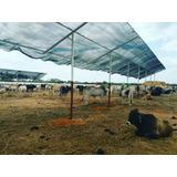 Malla 80% Sombra Polisombra Rafia Cultivos Vivero Construcci