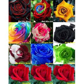 Kit 10 Cores = 100 Sementes Rosa Negra Arco Iris Etc