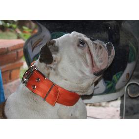 Collar Para Bulldog Ingles