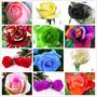 180 Semillas Rosa Exoticas 12 Colores Arcoiris Rojo Azul