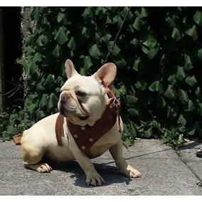 Bulldog Frances Semental Con Pedigree Hijo De Campeon Mex
