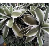 Plantas Cactaseas Artificiales