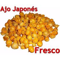 Ajo Japones Ajo Chino 250 Gr Japanese Garlic Semilla