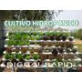Aprende Hidroponia Cultivos Sembrar Hidroponicos Digital