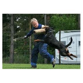 Rottwei! Para Todas As Raças, Adestramento De Cães Em 3 Dvds