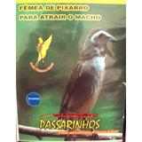 Pixarro Femea - Cd P Esquentar O Macho - Cd