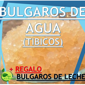 Bulgaros De Agua Tibicos+ Kefir (leche) +guia Envio Gratis