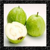 Goiaba Branca Graúda Sementes Frutas Para Mudas E Bonsai