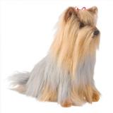 Hermoso Perro Yorkshire Terrier Adulto De Peluche Douglas
