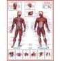 Mapas Do Corpo Humano 120x90 Cm A Sua Escolha Frete R$ 6,00
