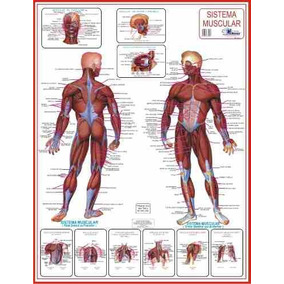Mapas Do Corpo Humano 120x90 Cm A Sua Escolha Frete R$ 10,00