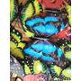 Decoracines Mariposas Decorativas Para Jardines Venta/docena