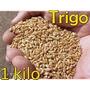 Semilla Trigo 1 Kilo Grano Wheat Grass Integral Wheatgrass