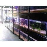 Kit Pecera 100x40x30 Tropical! Acuario Aquariumba