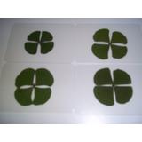 Trevo De 4 Folhas Da Sorte Plastificado - 4 Unidades