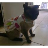 Pelitos Vestidos Y Soleras Para Pequeñas Mascotas