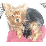 Hermosos Cachorros Hembras De Yorkshire Mini Con Fca