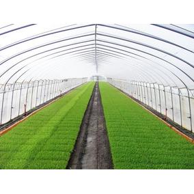 Plastico Invernadero Importado De Israel 4 Años 8.20 M 25%