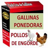 Kit Aprende Cría Aves Gallinas Ponedoras Pollo De Engorde