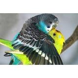 Hormônio Feromônio De Reprodução Pássaros- Aves Ornamentais