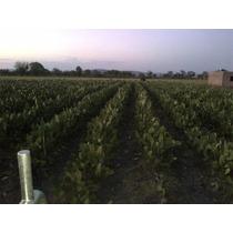 Terreno Nopales Valtierrilla Gto.