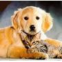Pensión / Guardería De Mascotas
